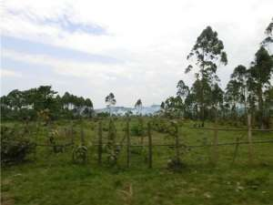 Растительность в значительной степени заменила срубленные тропические леса на большей части бассейна реки Конго. Чем меньше леса, тем меньше испарение и сильнее потепление. (Фото: © Вим Тьери)