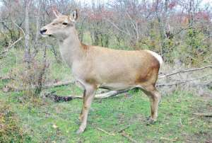 Исчезающие животные ростовской области реферат 4255