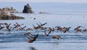 Aрктический заповедник «Остров Врангеля». Фото: http://gidtravel.com