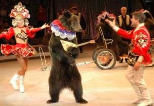 Животные в цирке. Фото: http://rigaportal.lv