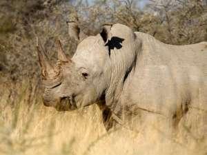 В заповеднике Зимбабве носорог затоптал насмерть гида. Фото: Global Look Press