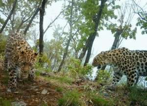 Земля леопарда. Фото: http://www.inquirebotany.org