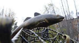 Памятник треске. Фото: http://www.belta.by