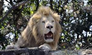 Такое самоутверждение над слабым — признак незрелой души, добавила президент центра защиты прав животных «Вита». Фото с сайта РСН