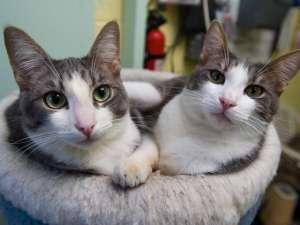 Местные власти приняли постановление, обязывающее хозяев стерилизовать или кастрировать кошек и снабжать их микрочипом. Фото: Global Look Press