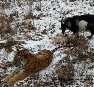 Фото: http://www.safaripark25.ru