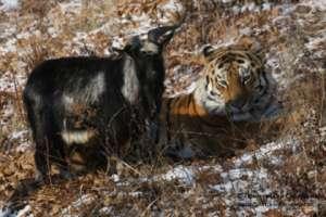 Фото: Приморский сафари-парк