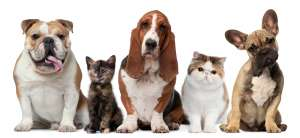 Домашние животные. Фото: http://ladylike.by