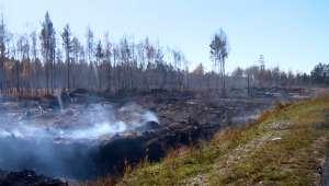 Фото с сайта Вести.Ru (www.vesti.ru)