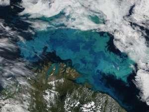 Цветение фитопланктона в Баренцевом море. © NASA