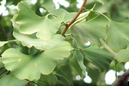Самые  необычные растения в мире