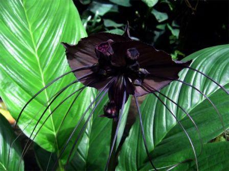 Странные и редкие растения в мире