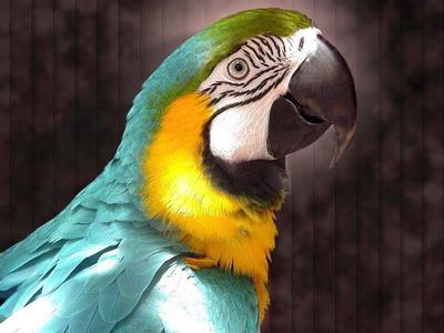 И хоть человеку до сих пор неизвестно все о попугаях, они являются одними из наиболее