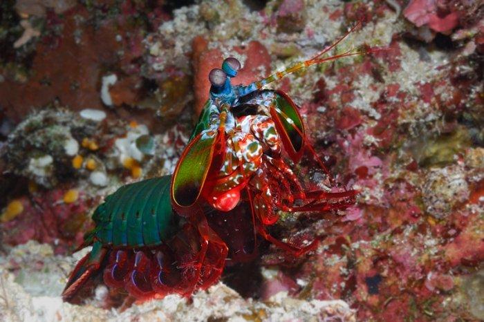 Роскошные обитатели подводного царства