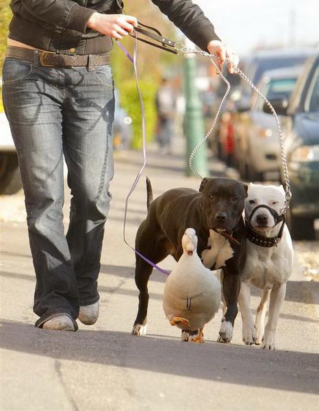 Необычная дружба в мире животных