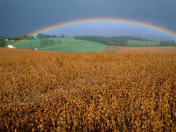 Чудеса природы картинки радуга