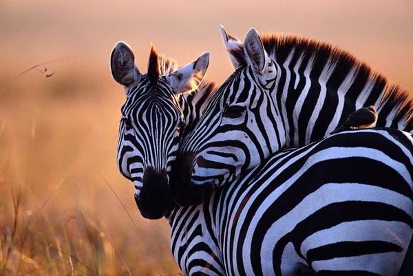Картинки по запросу любовь животных фото