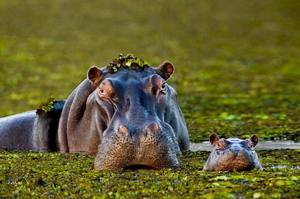 Cемьи животных в книге Стива Блума