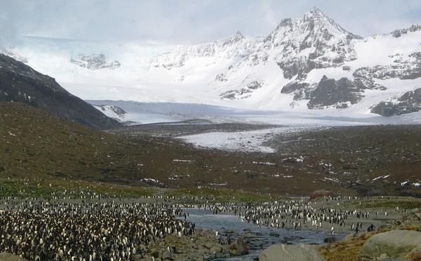 Картинки лета в антарктиде