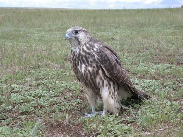 Государственный природный биосферный заповедник Даурский