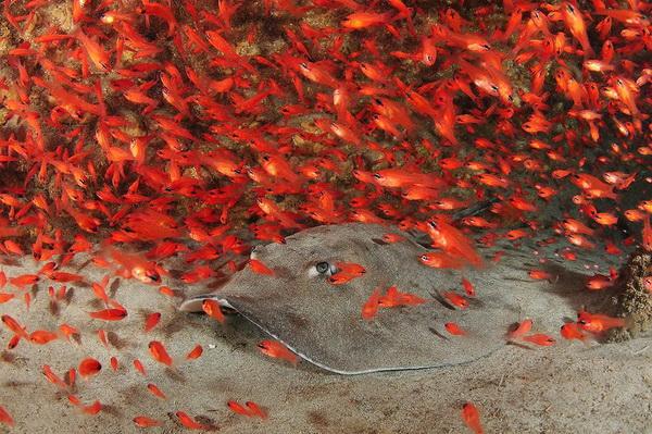 Лучшие подводные фотографии 2011 года