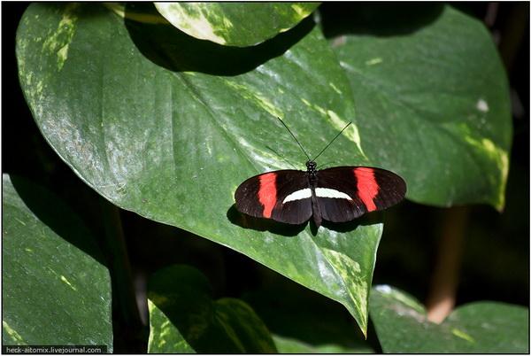 Бабочковый рай