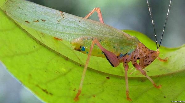 Необычная фауна Суринама