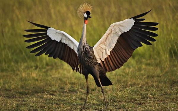 Фотофакт десять самых красивых птиц в