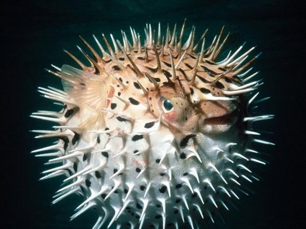 Десять самых ядовитых животных на планете