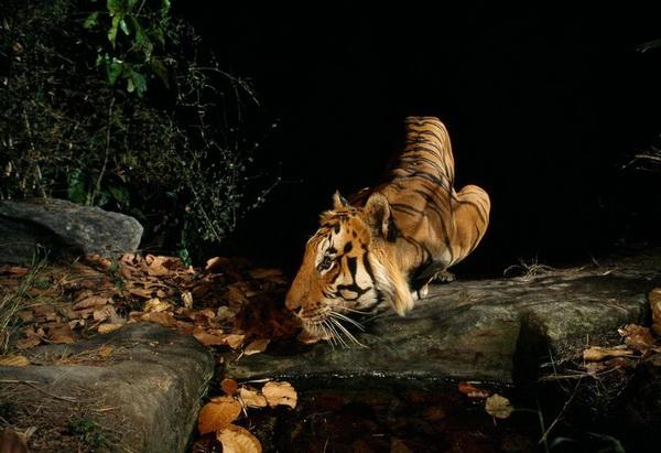 Фотокапкан или тайная жизнь животных