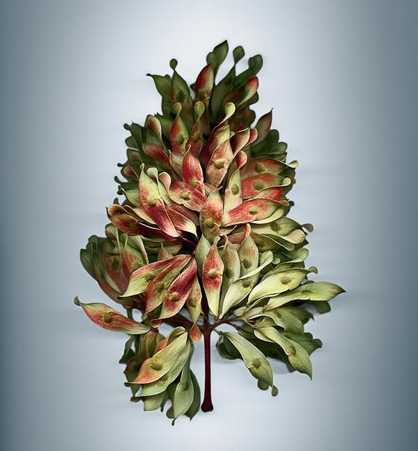 Органы размножения растений