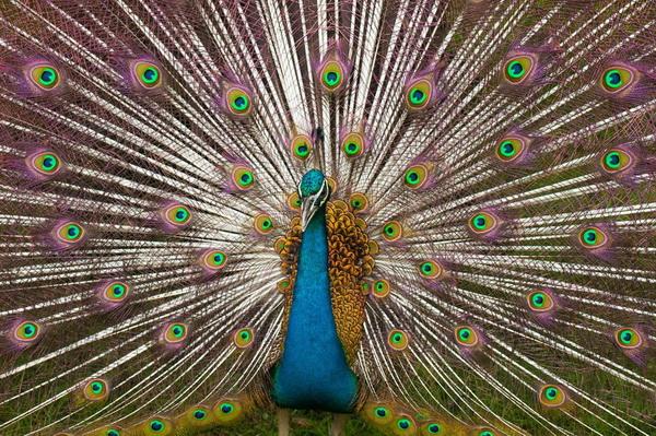 10 превосходных примеров симметрии в природе