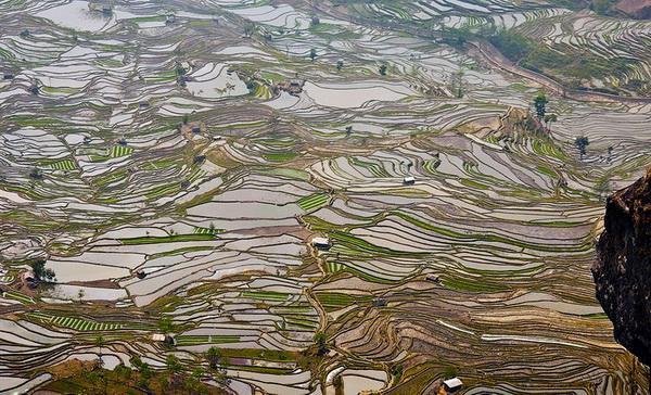 Рисовые террасы Хунхэ-Хани