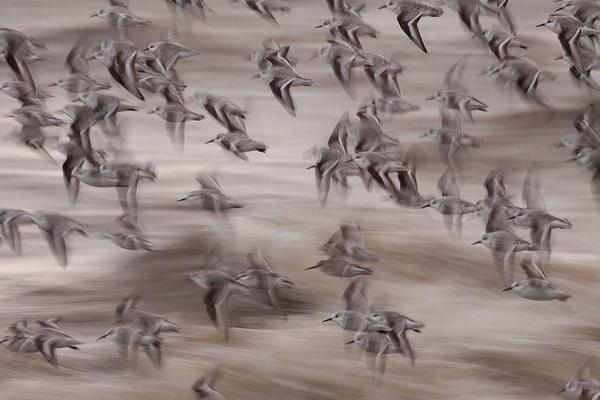 Итоги крупнейшего европейского конкурса фотографии дикой природы GDT 2013