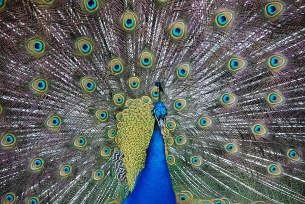 10 самых красивых птиц в мире