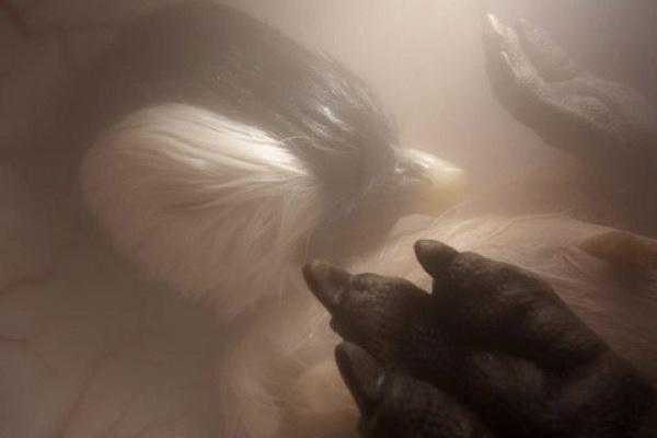 Как выглядят животные в утробе матери