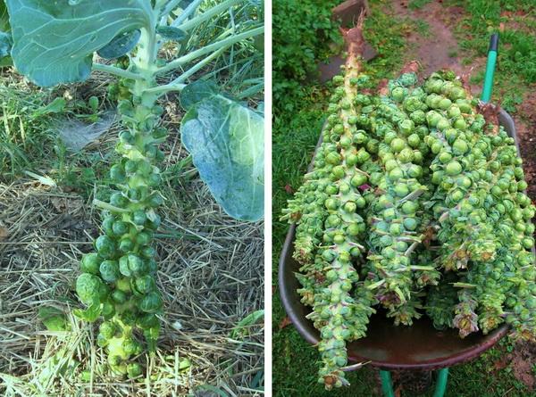 Как растут некоторые фрукты и овощи