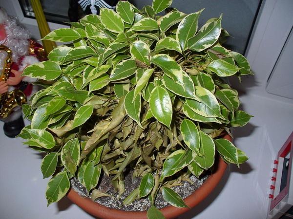 Комнатные растения, очищающие воздух
