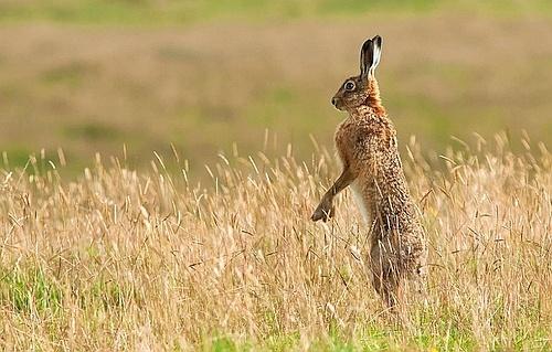 Лучшие фотографии млекопитающих-2014