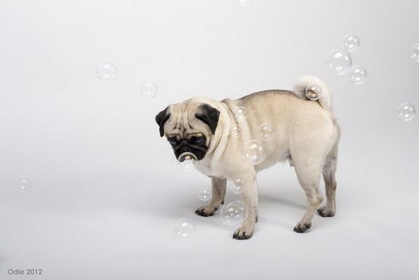 Фотофакт: Десять удивительных животных, которые умеют говорить