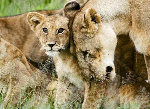 Фотофакт: Десять худших матерей среди животных