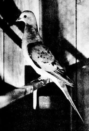 Фотофакт: Десять видов животных, которых истребил человек