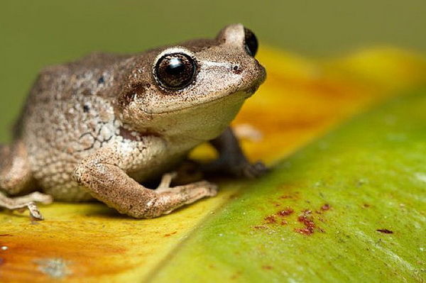 Фотофакт: Десять совершенно ошибочных фактов о животных