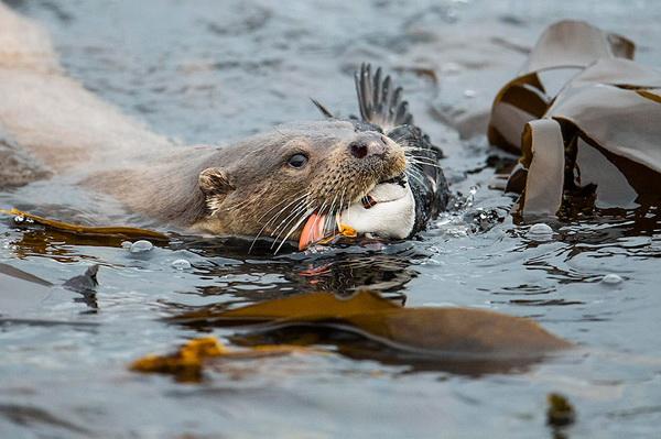 Фотофакт: Победители Британского конкурса дикой природы 2014
