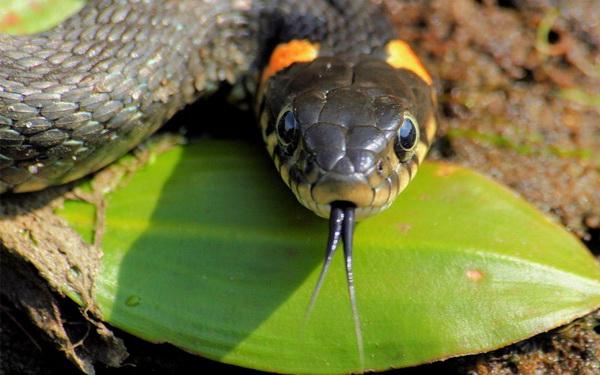 Фотофакт: Десять самых распространенных мифов о змеях