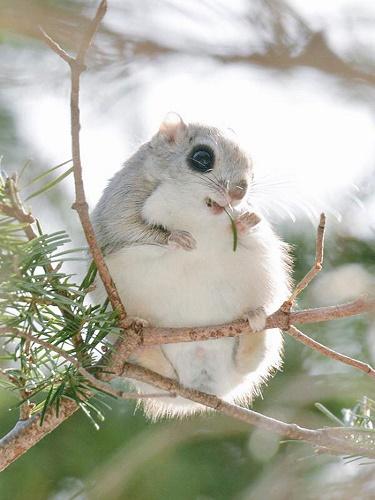 Фотофакт: Семь самых милых животных с острова Хоккайдо