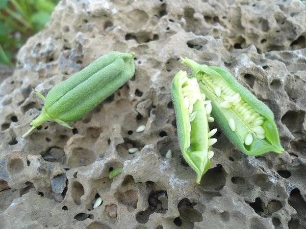 Фотофакт: Как выглядят популярные продукты до сбора урожая