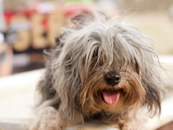 Фотофакт: Десять самых дорогих пород собак