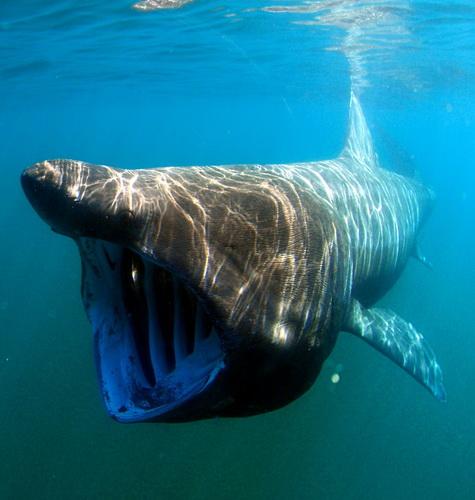 Фотофакт: Семь наводящих ужас животных, которых не стоит опасаться