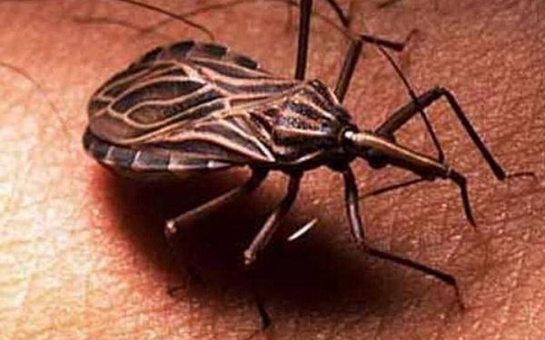 Фотофакт: Десять паразитов, которых следует опасаться летом